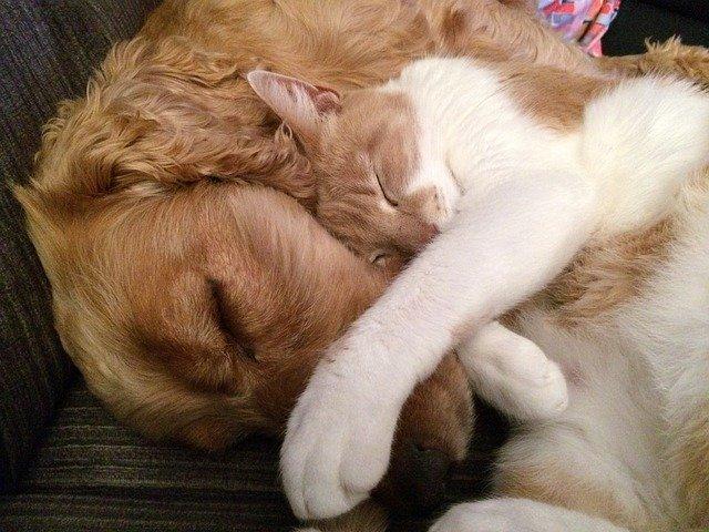 spánek kočky u psa.jpg