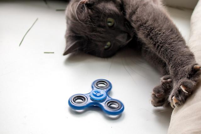 kočka s hračkou.jpg