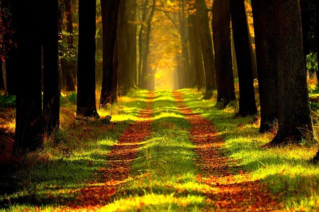 cesta lesem