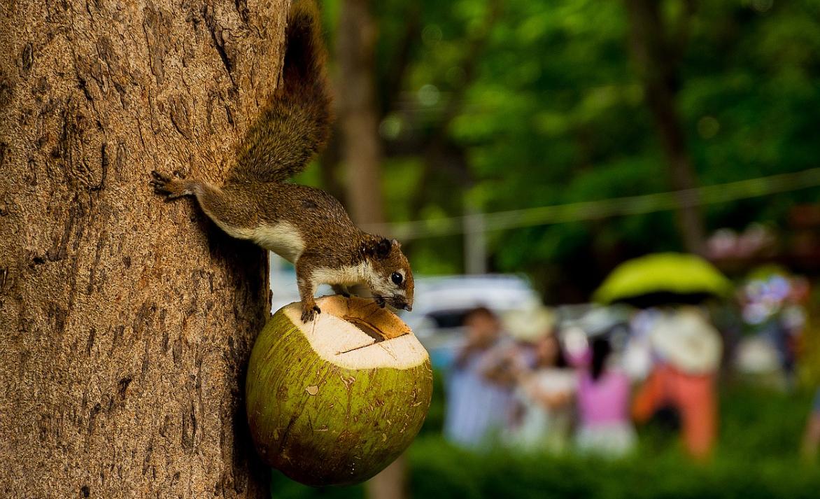 zvíře a kokos